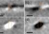 Time-resolved magnetic imaging of Œrsted-field effects in cylindrical nanowires