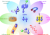 Review on spintronics: Principles and device applications